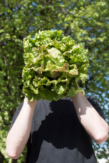 Green salad, part of a healthy nutrition