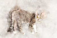 A graceful gray tabby cat with yellow eyes stands and looks at the camera.. Stylization in watercolor drawing.