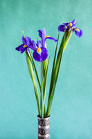 iris flowers on green textured paper background