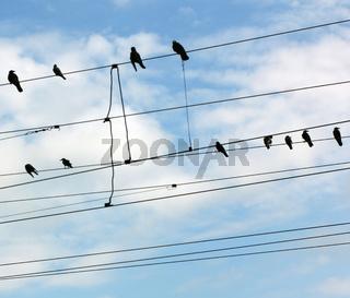 Birds on