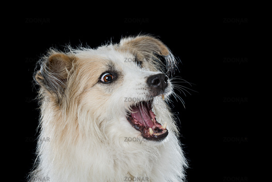 Cute mixed breed dog on black background