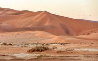 Dead Vlei landscape in Sossusvlei, Namibia Africa