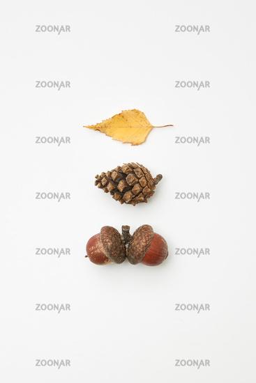 Acorns, cone and leaf