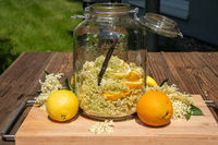 Elderberry blossoms and orange and lemon slices in a large preserving jar