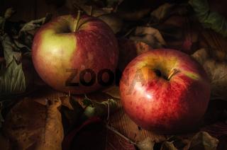 apples among dry foliage