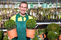Gardener with boxwood posing at nursery or garden center