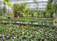 Greenhouse scenery