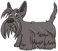 Scottish Terrier purebred dog cartoon illustration