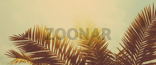Tropical palm tree leaves in hot summer day as vintage background, summer nature and travel