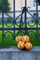 Black mesh bag full of oranges as a symbol of zero waste lifestyle is hanging on the wrought iron fence