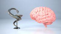 Medical Neuroscience