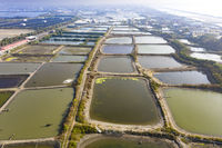 Aerial View of fish farms  in west  Coast . Taiwan