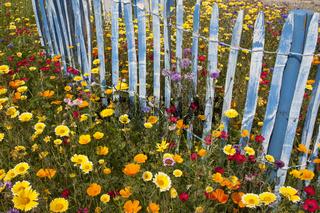 Blumenwiese-um-Staketenzaun