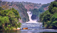 The Murchison Falls at Murchison Falls National Park Uganda