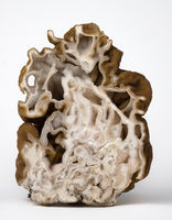 Cuted mushroom morel on white background. Close up view.