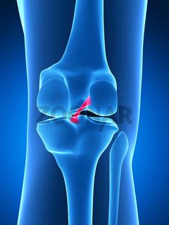 3d rendered illustration - knee anatomy