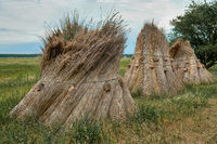 Reed stacks along a filed left for drying