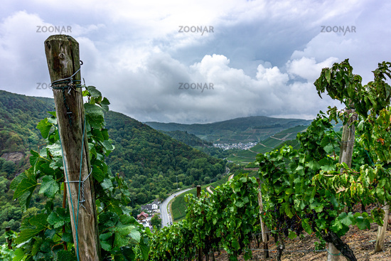 Vineyard in the Valley of the Ahr in Germany