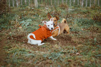 Two little dog friends playing together at a meadow. Analog vintage film look with swirley bokeh. Playful dogs in the cold season concept.