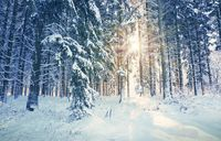 Winter sunshine through trees in german forest.