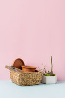 Home gardening tools on blue and pink background. Spring household work