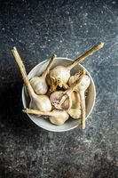 Homegrown white garlic. Bio garlic bulbs in bowl.