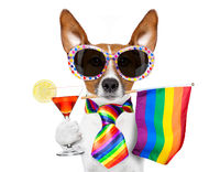 gay pride dog with rainbow