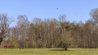 Schopflocher Moor, Landscape, Swabian Alb, Southern Germany Spring, April