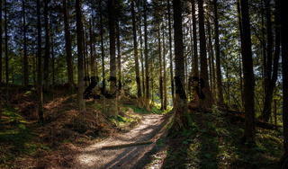 Forest path in good weather with a few rays of sun