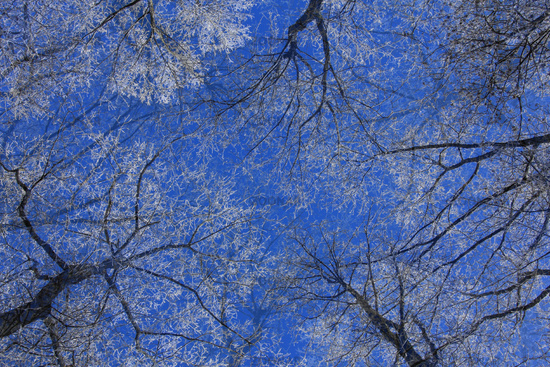 Trees with hoarfrost