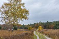 Autumn background nature park