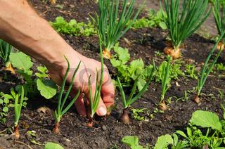 Unkraut jaeten - pull up weeds 03