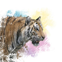 Tiger portrait watercolor.