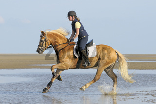Reiten im Watt / Riding in the mudflat