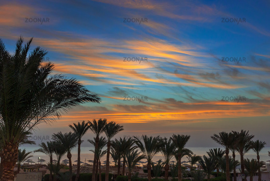 palms and sea on resort before sunrise