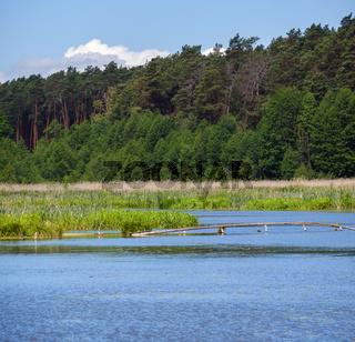 Summer valley lake landscape