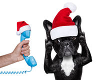 santa claus dog listening  to the phone