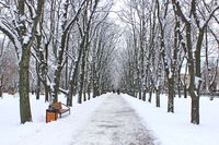 Beautiful park alley with bench and trees in winter sunny day. Beautiful park with promenade path