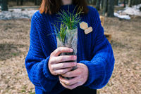 A young girl in a blue sweater holds a cedar seedling in her hands. Pine family plant for planting in the ground. The concept of restoration and protection of forests, ecology.