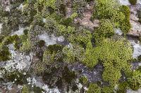 Mit Moos bedeckte Wand, Nahaufnahme