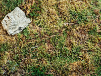 moss background with copy space