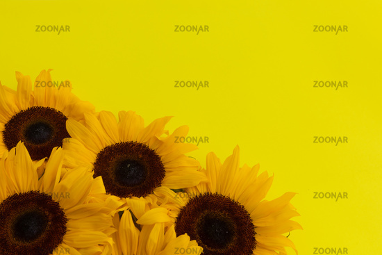 Bunch of sunflowers in bottom left corner on yellow background