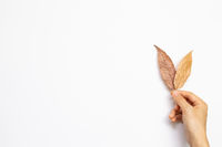 Hand picking autumn dry leaves on white background. top view, copy space