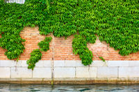 House by canal in Venice with climbing ivy