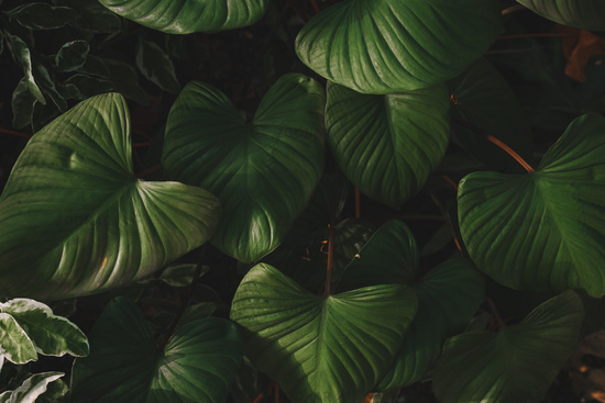 Photo Matte Tropical Green Leaves Background Image 16039869 800 x 800 jpeg 152 кб. zoonar