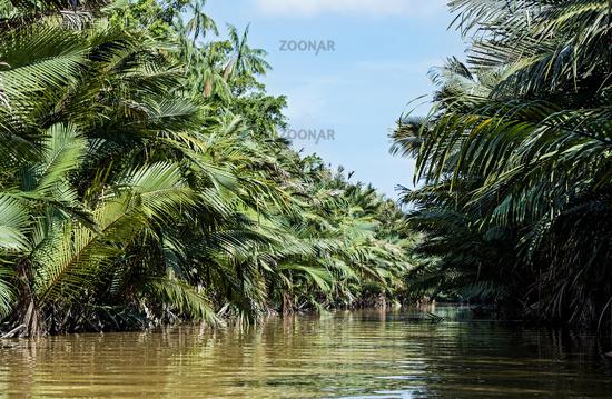 Nipapalmenwald am Flussufer