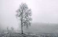 Landscape in the fog