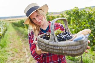 Picknickkorb mit roten und weißen Weintrauben