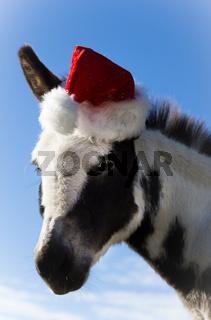 Santa Esel