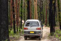 Driving the back roads of Mogo through burnt bush land